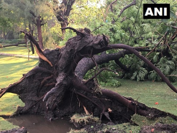 Hyderabad: around 80 trees fall in Zoo during Saturday rain; mar visitors' fun