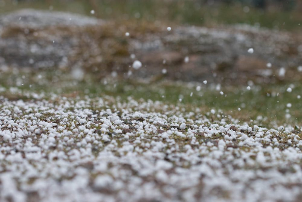 Hailstorm predicted today and tomorrow.