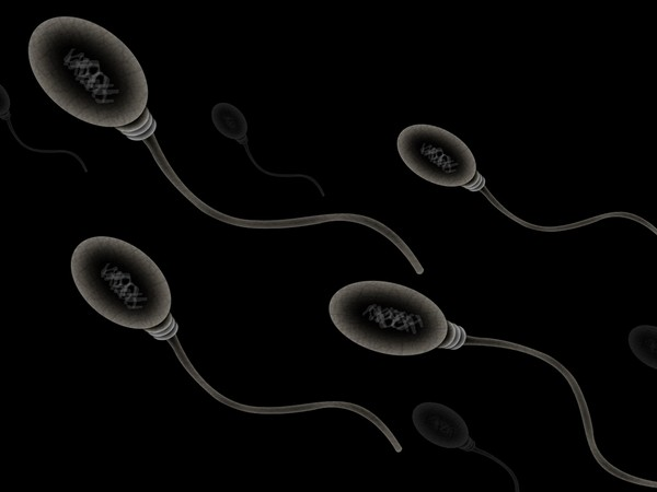 Masculinity used as currency to lure sperm donors