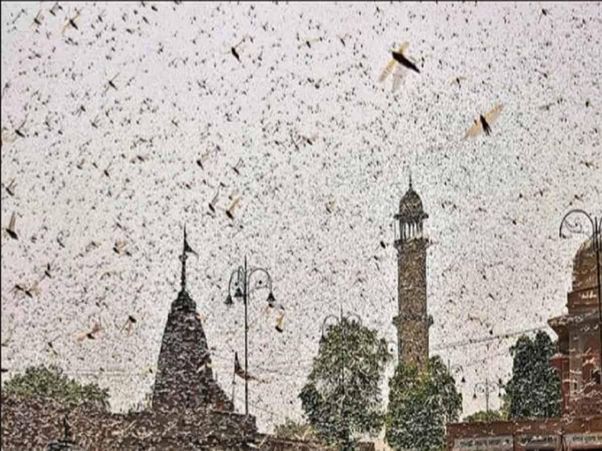 Locust attack in Hyderabad